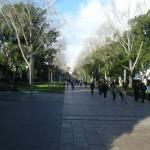 Studieren in Australien oder doch nur ein Auslandssemester?