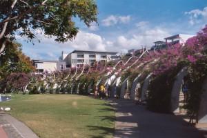 Bougainvillea Grand Arch - South Bank Parklands