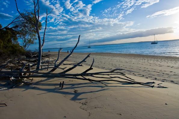 Fraser Island 0114