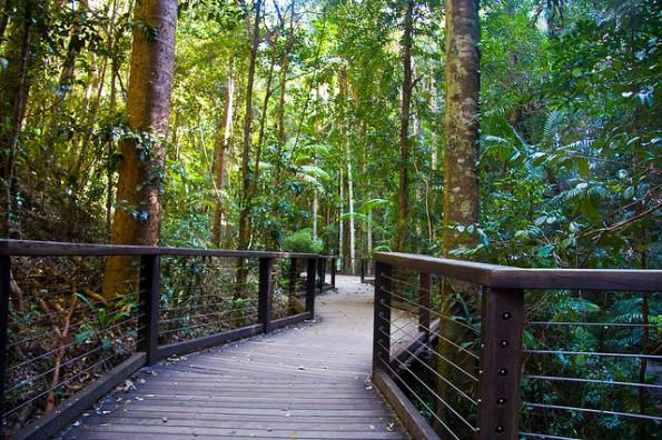 Foto: Michael Dawes Fraser Island ist der einzige Ort der Welt, wo Regenwald auf Sand wächst.